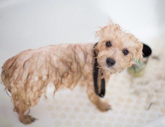 pet-wash